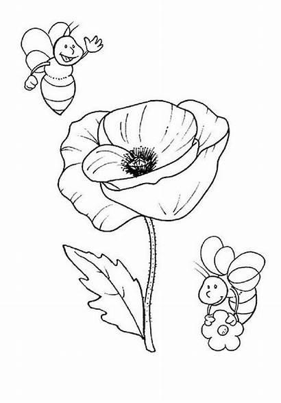 Amapola Colorear Flores Pintar Dibujos Patrones Blumen