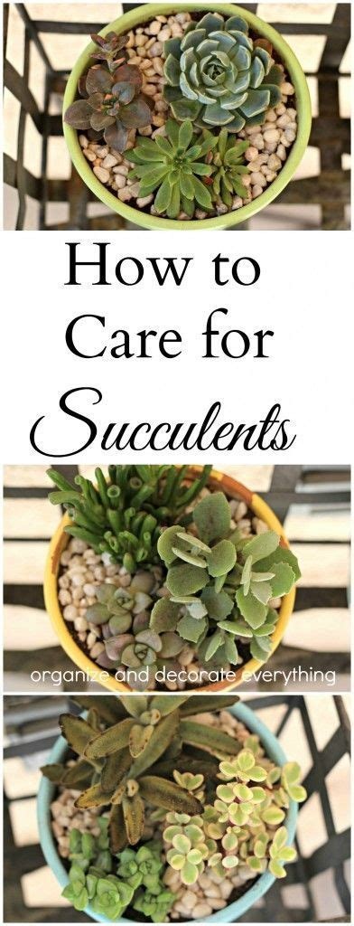 how to take care of a succulent how to care for succulents gardening pinterest gardens plants and air plants