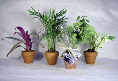 plantes de bureau 8 plantes dépolluantes pour le bureau plantes