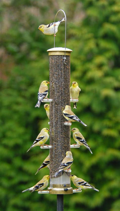 wild birds unlimited best finch food