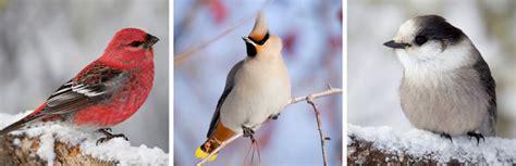 workshop  identifying minnesota birds cultural center