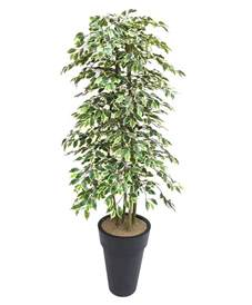 artificial variegated ficus tree and handbuilt trees from evergreen di