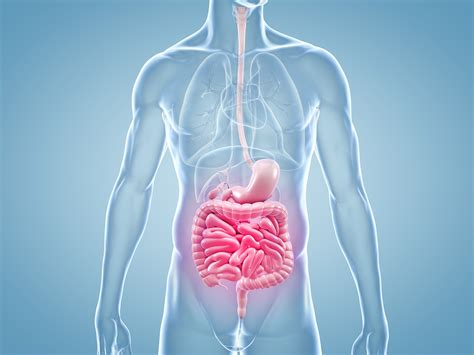 Candida, albicans, hefepilzinfektion, Pilzinfektion und