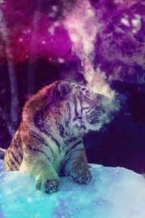 Galaxy Animal Wallpaper - galaxy tiger spiritual tigers and galaxies