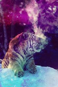 Galaxy ~ tiger | Edits | Pinterest | Tigers and Galaxies