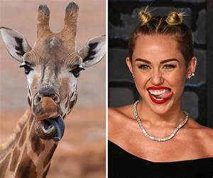 The best animal / celebrity lookalikes you'll see today ...