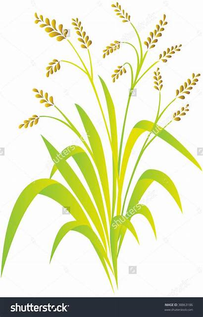 Rice Clipart Plant Planting Vector Shutterstock Clip