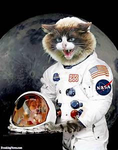 Pin Cat Astronaut on Pinterest