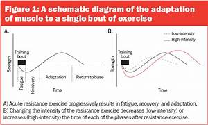 Strength Training  Overloading To Increase Muscle Mass