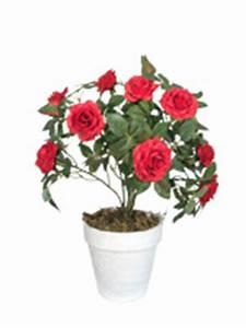Rosen Im Topf Pflege : kunstpflanzen von dekoflower auf rechnung ~ Lizthompson.info Haus und Dekorationen