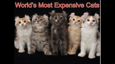 expensive most cats