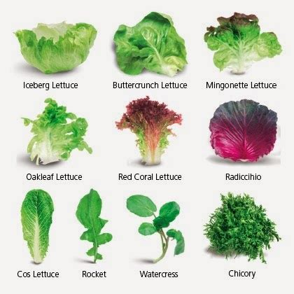 kinds of lettuce greens 21 epiphanies from the 21 day no junk food challenge