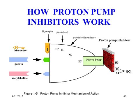 Proton Pumps by Inhibitors Of Proton