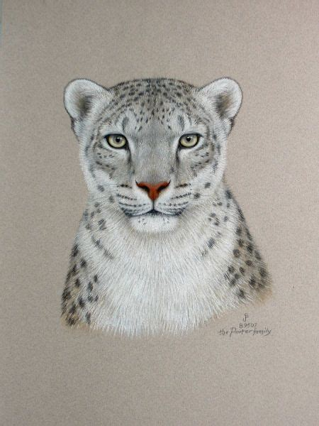 White Snow Leopard Drawings