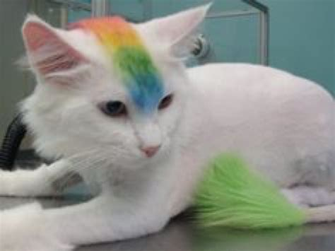 unhappy cats  hate  stupid haircuts