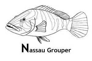 Grouper Coloring Pages