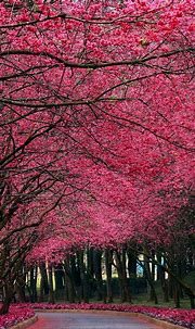 Pink-Flowers-Autumn-Trees-Park-iPhone-Wallpaper - iPhone ...