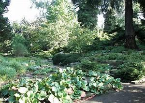 Pflanzen Im Schatten : gartengestaltung potsdam bornim bei berlin staudengarten karl foerster garten 43 ~ Orissabook.com Haus und Dekorationen