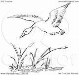 Duck Pond Flying Cattails Clipart Cartoon Coloring Clip Vector Pages Outlined God Child Picsburg Clipground 1080 1024 sketch template