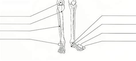 print exercise   appendicular skeleton flashcards