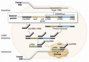 Crispr  Cas9 And Targeted Genome Editing  A New Era In