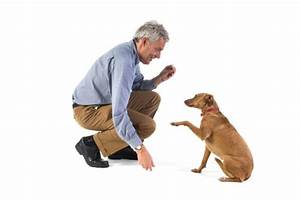 becoming a licensed dog trainer With become a dog trainer