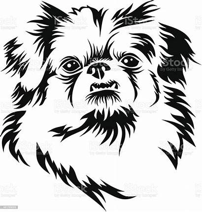 Pekingese Dog Pekinese Head Drawing Clipart Sketch