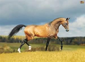 Prettiest Horse Breeds | Pets4Homes