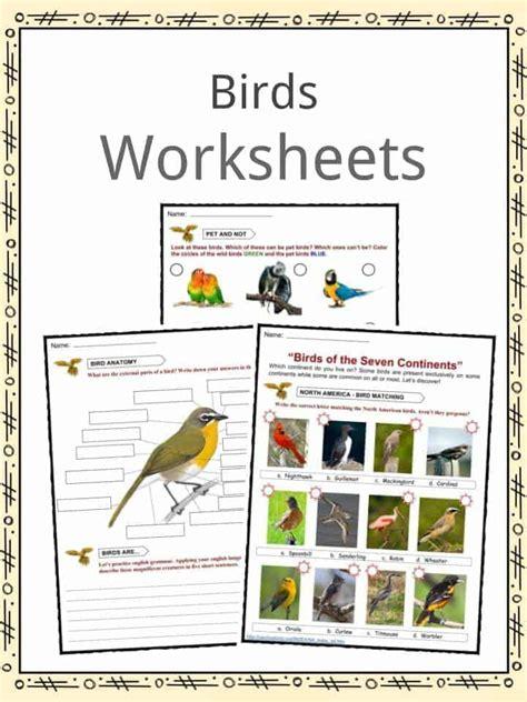 bird facts worksheets habitat diet information  kids