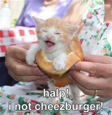 Cheezburger Cat Meme - lolcats cheezburger