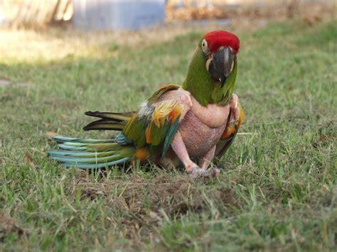 r 233 flexions pr 233 alables 224 l acquisition d un oiseau partie