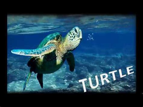 Learn Water Animal Namesbest Toddler Sea Knowledge Video