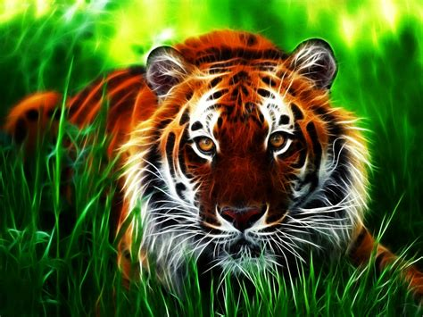 3d Wallpaper Hd Tiger by Wallpapers Tiger 3d Wallpapers
