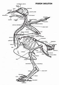 Human Body   Labeled Skeleton  Labeled  Skeleton