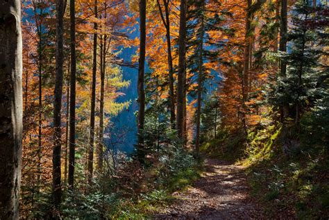 Autumn Leaves by Ingo Meckmann on 500px. | Autumn leaves ...