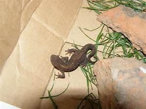 Je Sais Pas Quoi Manger : salamandre minuscule sa nutrition de l 39 aide au jardin forum de jardinage ~ Medecine-chirurgie-esthetiques.com Avis de Voitures