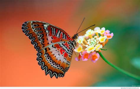 monday  movement butterfly butterfly flutter