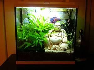 Deco Aquarium Zen : decoration aquarium bouddha ~ Melissatoandfro.com Idées de Décoration