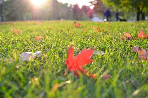 Herbst Im Garten Was Ist Zu Tun by Rasen Im Herbst Was Ist Zu Tun