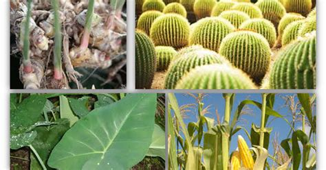 pendidikan pembelajaran adaptasi tumbuhan