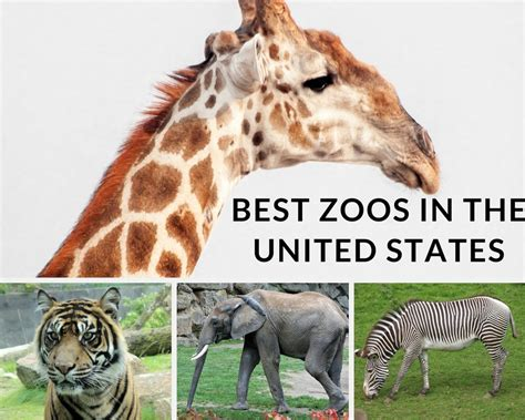 states united zoos email print