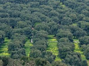 Olivenbaum Pflege Im Topf : olivenbaum infos olivenb ume lat olea europaea lbaum ~ Buech-reservation.com Haus und Dekorationen
