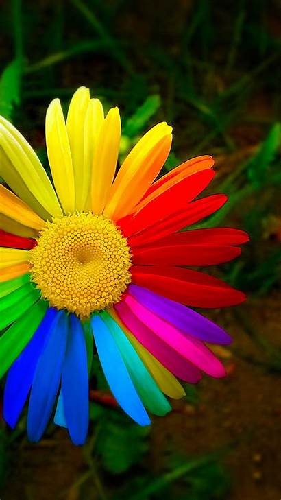 Rainbow Flower Phone Wallpapers Wallpapertag