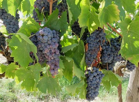 Brolio Castle Some Wine With Your Historyarttrav