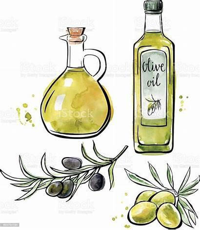 Olive Oil Illustration Vector Watercolor Clip Clipart