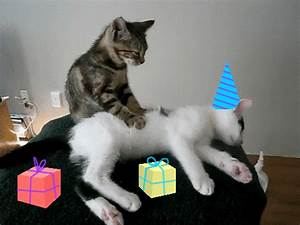 Birthday GIFs - Find & Share on GIPHY