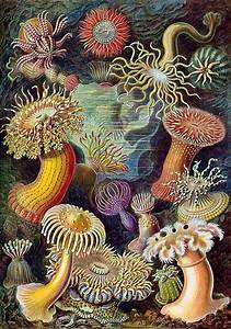 botanical artwork revivals ernst haeckel exhibit at
