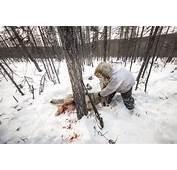 Wolf Hunting In Siberia  James Morgan