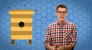 Warum Machen Bienen Honig : wie machen bienen eigentlich honig ~ Whattoseeinmadrid.com Haus und Dekorationen