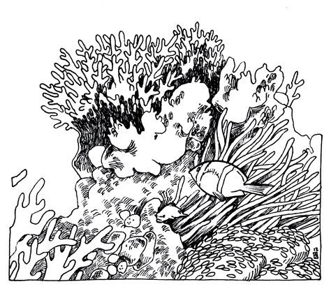 coral reef drawing google search coral reef drawing